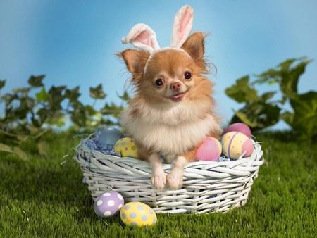 Dog Sitting in Easter Basket